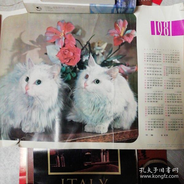 81年双猫挂历