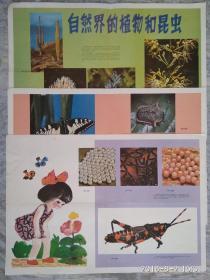 教学挂图 自然界的植物和昆虫  (共三张)