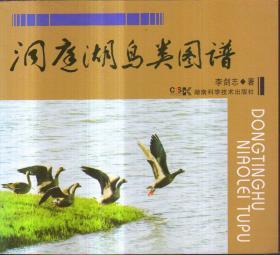洞庭湖鸟类图谱