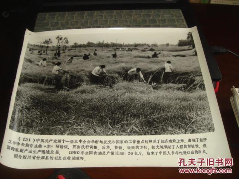 中国近代现代史照片(121 四川省什邡县的社员在收油菜籽)