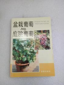 盆栽葡萄与庭院葡萄 品佳如图