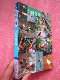 云南鸟类   大32开全铜版纸彩印图文并茂.