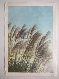 1936年  大坂每日新闻 (尾花)  彩色8开