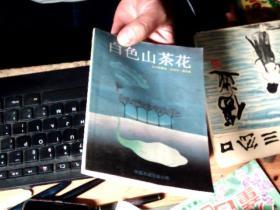 白色山茶花         QQ2