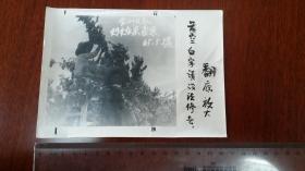 """1965泾县兰山大队妇女在摘桑果1965""""农业靠大寨""""展览设计布展的设计原片"""