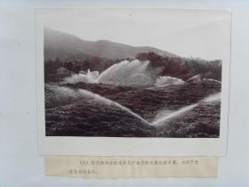 老照片:【※1978年浙江杭州市,西湖龙井采用机械灌溉增加产量※】