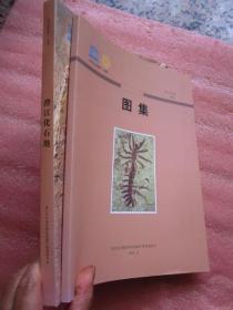《澄江化石地》 +《澄江化石地图册》【两册合售】