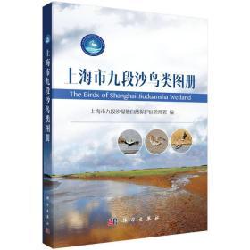 上海市九段沙鸟类图册
