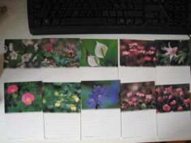 日本邮资明信片.10全如图花