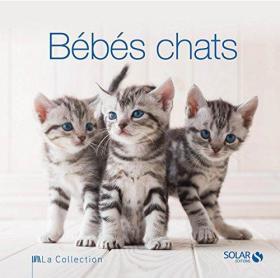 Bébés chats