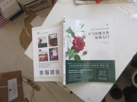 人气玫瑰月季盆栽入门
