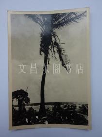 民国时期 日军在海南岛三亚 黑白照片1张