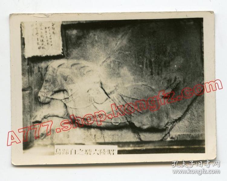 民国1930年代陕西醴泉昭陵六骏之白蹄乌,西安