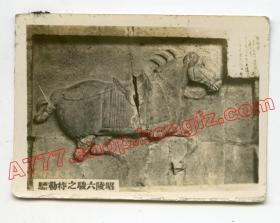 民国1930年代陕西醴泉昭陵六骏之特勒骠,西安