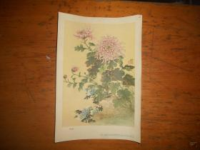 粉毛刺、1957年一版一印、陆抑非 绘画
