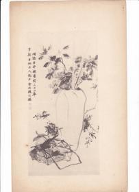 民国  珂罗版 画片 散页【赵之谦】 花卉图 一张