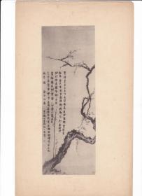 民国  珂罗版 画片 散页【金农】 花卉图 一张