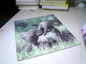 小聪仔. 自然 —.—  大象