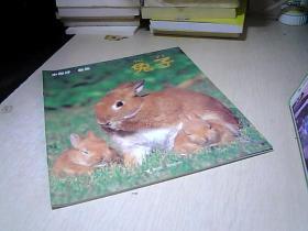 小聪仔. 自然 —.— 兔子