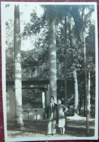 民国老照片:民国旗袍美女,与男友,南方棕榈树【陌上花开系列】
