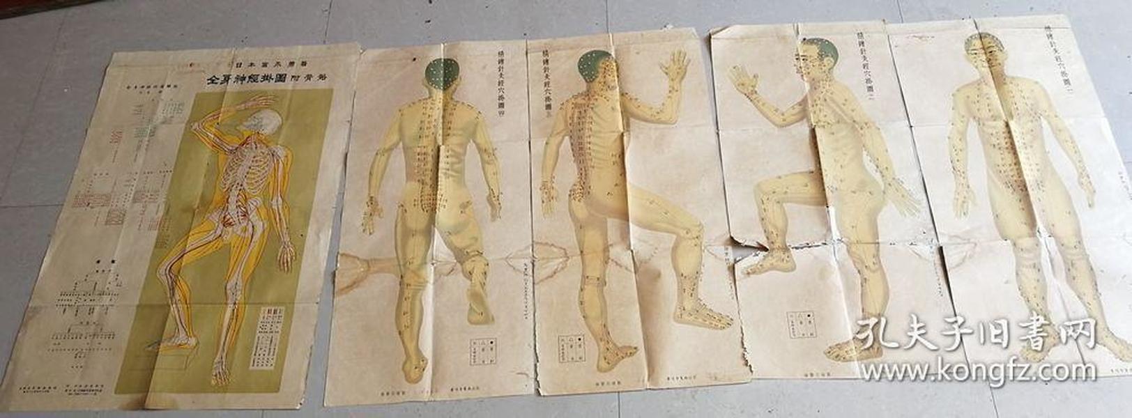 精美印刷民国针灸穴位彩图一套4张.日本名家骨骼经脉图一张