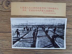 老照片:【※1959年,甘肃敦煌人民公社的社员们,冒着塞外的严寒大搞园田化※】