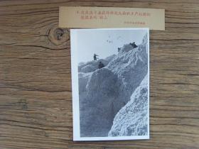 老照片:【※1959年,甘肃敦煌县棉花大丰收,棉花堆成山※】