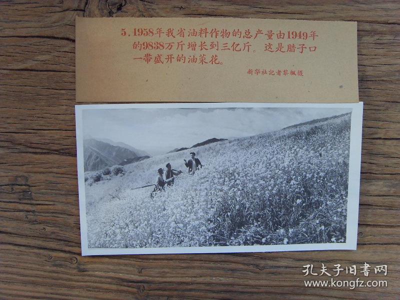 老照片:【※1959年,甘肃甘南州迭部县,腊子口盛开的油菜花※】