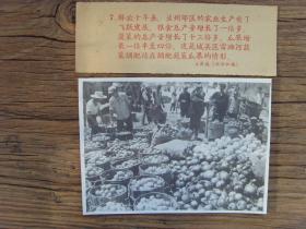 老照片:【※1959年,甘肃兰州市城关区,雷滩河蔬菜调配站※】