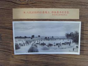 老照片:【※1959年,人民公社的打麦场上,洋溢着丰收景象※】