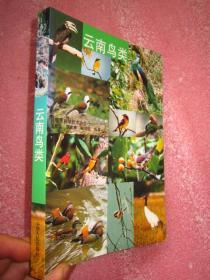 云南鸟类   大32开全铜版纸彩印图文并茂