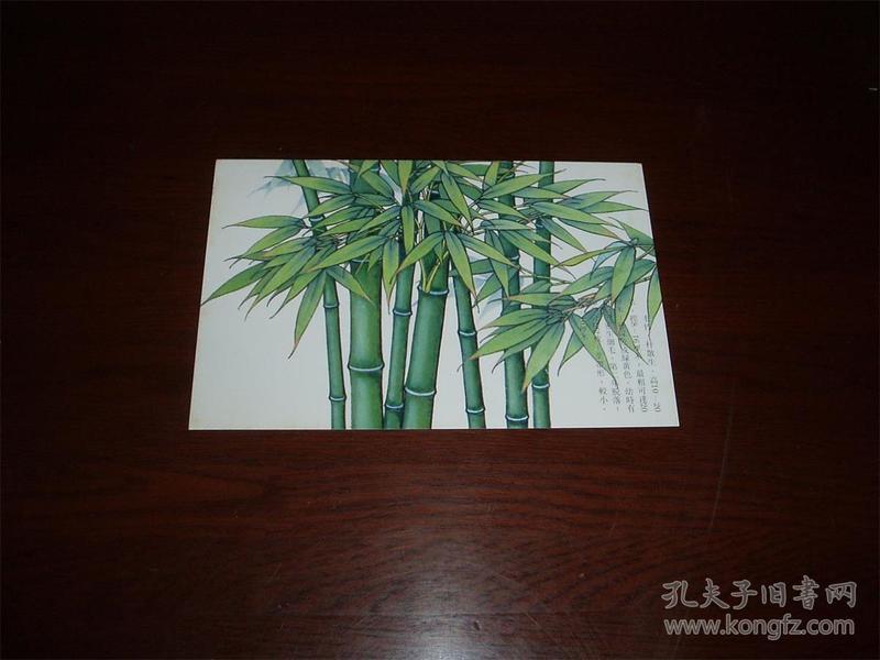 竹子明信片