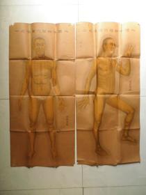 民国中华针灸学社《人体十四经穴图像》四张全