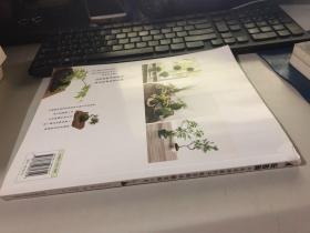 玩苔藓:六大名师教你手制苔藓球和苔藓小景
