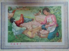 中国经典年画宣传画大展示------60年代-------《鸡壮蛋大》---非卖品---虒人荣誉珍藏