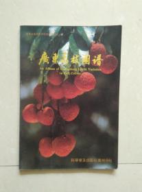 广东荔枝图谱