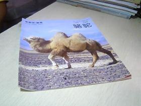 小聪仔. 自然 —.—  骆驼 .