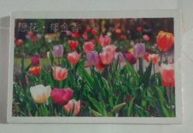 恋花 郁金香 明信片 30张盒装 未开封