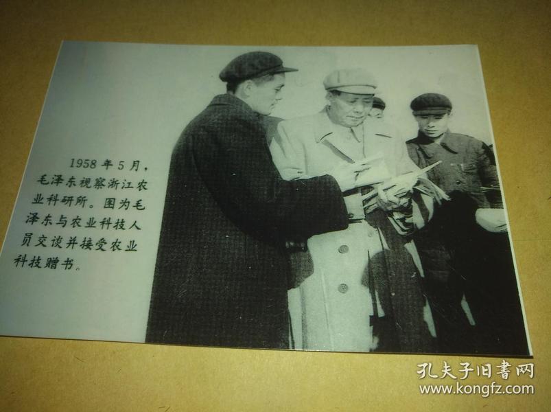 1958年5月毛泽东视察浙江省农业科学研究所照片【黑白4寸】特别少见