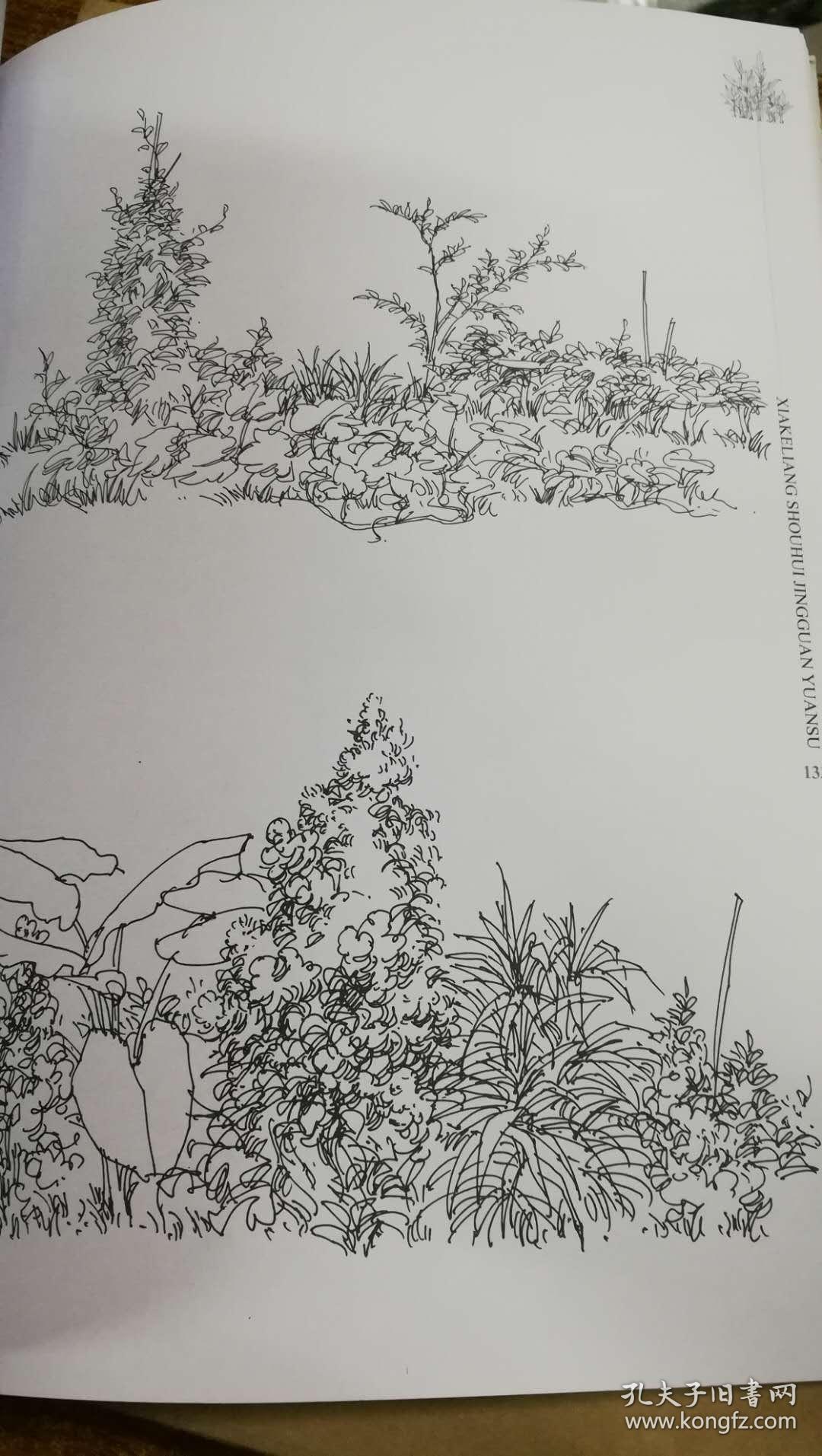 夏克梁手绘景观元素植物篇(上))