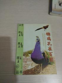 锦鸡孔雀百图
