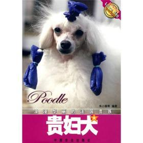 浪漫华丽的法国贵族:贵妇犬