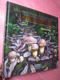 《中国云南野生菌》(手绘百菌图)12开精装 铜版纸彩印【全新】