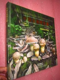 《中国云南野生菌》(手绘百菌图)12开精装 铜版纸彩印