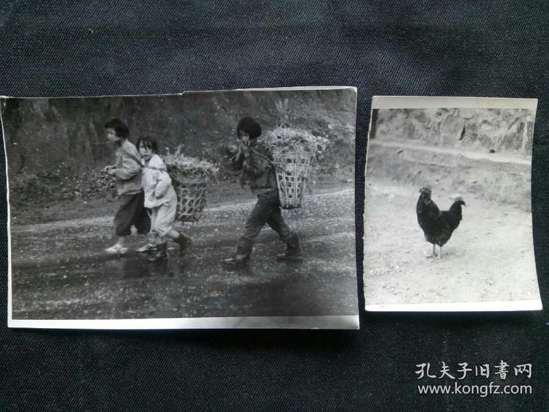 贫困山区里的3个女童 养鸡 资料老照片