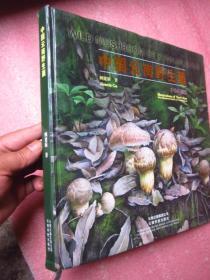 《中国云南野生菌》(手绘百菌图)12开精装 铜版纸彩印....品相与图为准——免争议