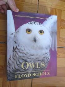 Owls (外文原版)   大16開,硬精裝