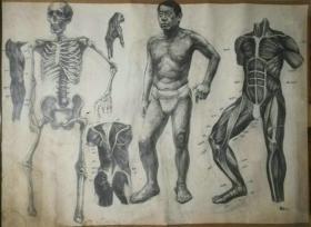 *FWPQYK-带款的一幅画家大幅素描-男人体,笔法细致,品相较好