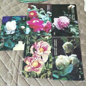 第十一届亚洲运动会留念明信片(牡丹花,5张合售)