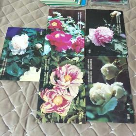 第十一届亚洲运动会留念明信片(牡丹花,4张合售)